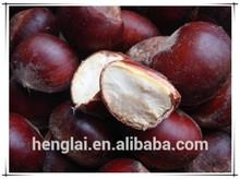 Exportación de la agricultura de productos / chino secas de la castaña 2015 nuevo precio