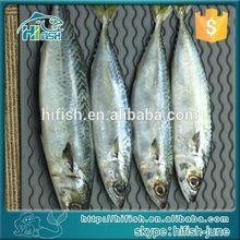 price frozen mackerel,pacific mackerel WR on sale