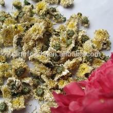 dried white chrysanthemum flower chrysanthemum morifolium