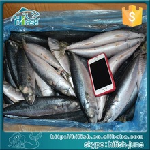 Food price list of WR mackerel 200-300g sea frozen quality products
