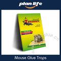 inofensivo ao homem pegajosa cola caixa dobrável mouse trap