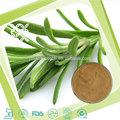 A base de hierbas de la medicina 100% puro natural de romero p. E/extracto de romero