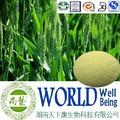 De malla 100 200 de malla/la hierba de cebada extracto/curar la diarrea