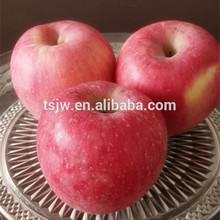 2015 New Year Fresh Fuji Apple biggest exporter chinese fresh fruit red apple Fuji