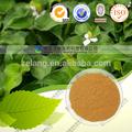 Extrait d'artichaut poudre cynarine globe en poudre à base de plantes extrait d'artichaut poudre médecine