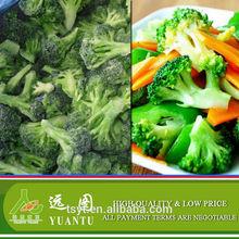 iqf frozen broccoli floret frozen food private label best quality