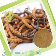 Herbal Product Wild Cordyceps Sinensis Extract Health food suppliment