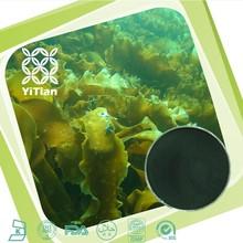 100 Natural Seaweed Extract