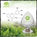 Alta calidad Moyeam planta extracto de té verde a granel