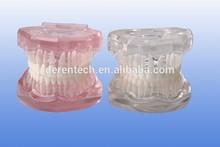 Standard dental model , orthodontic model