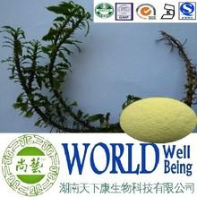 Hot sale Melaleuca alternifolia extract/Melaleuca alternifolia powder/Antiviral plant extract