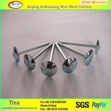 "1/2"" or 1-3/4"" steel Q195 wire nail ,iron nails,china roofing nails"