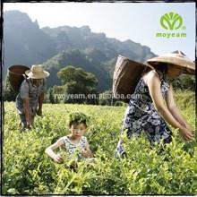 GMP organic tea Moyeam tea herb medicine