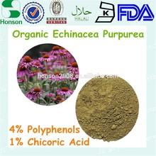 1% chicoric acid Echinacea Extract 4:1