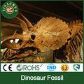 Lisaurus- d museu qualidade artificial escavar fósseis de dinossauro