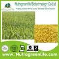natural puro todo orgánico harina de mijo