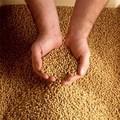 la proteína de soja en polvo de calidad alimentaria