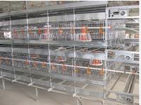 Auto chicken raising system / chick cage