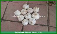 (HOT) Fresh white garlic specification more than 5 cm/GARLIC