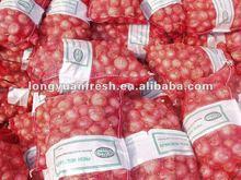 fresh onion price ton