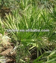 2012 Hotsale Saw Palmetto Herb Extract Total Fatty Acids 25%, 45%