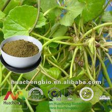 ISO&Kosher 10%-80% Asiaticoside/Madecassoside Centella Asiatica Extract Powder