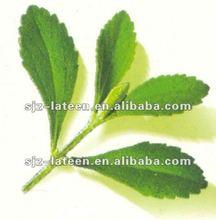 organic green stevia