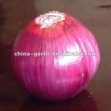 China Fresh Big Red Onion (5cm-7cm,7cm-9cm)