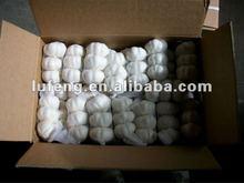 New Crop 2012 Chinese White Garlic