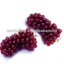 Grape seed/skin P.E. Proanthocyanidin 60% 80%90% 95%UV