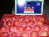 Yantai fresh apple