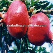 Pomegranate Peel Extract