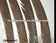 natural golden pheasant tails LZBMH000447
