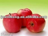 best price fruit apple