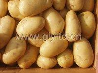 2012 Fresh Holland seed Chinese sweet potato