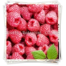 Raspberry extract powder(20%, 30%, 40% Ellagic Acid)