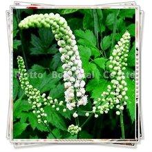 Black Cohosh Extract(Triterpenoid saponins 2.5%-20%)