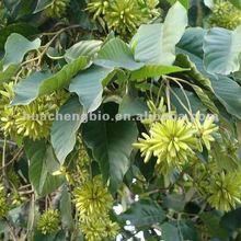 ISO Product Camptotheca Acuminata Seed P.E.\ 98% Camptothecin