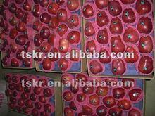 huaniu apple fruit