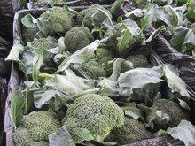 fresh broccoli 2012