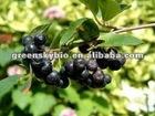 Chokeberry extract