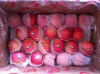 shandong yantai apple orchard supply fresh red fuji apple