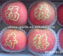 2012 Fresh Apple Price, Fuji/Gala/Red Star