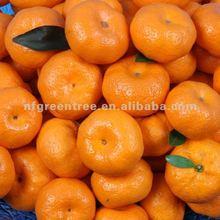 2012 Chinese mandarin orange