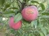 Apple fresh fruit exporters