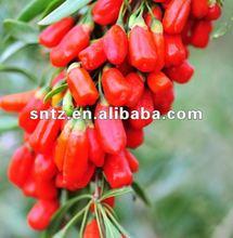 bulk goji berries