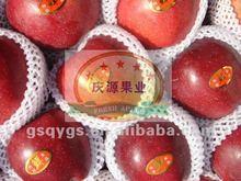 HUANIU fruit apple