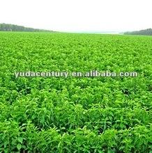 stevia leaf extract steviosides