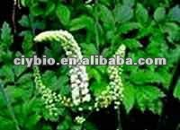 Chinese Herbal Natural Black Cohosh Extract Powder