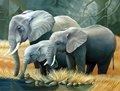 3D صور للكثير من الحيوانات